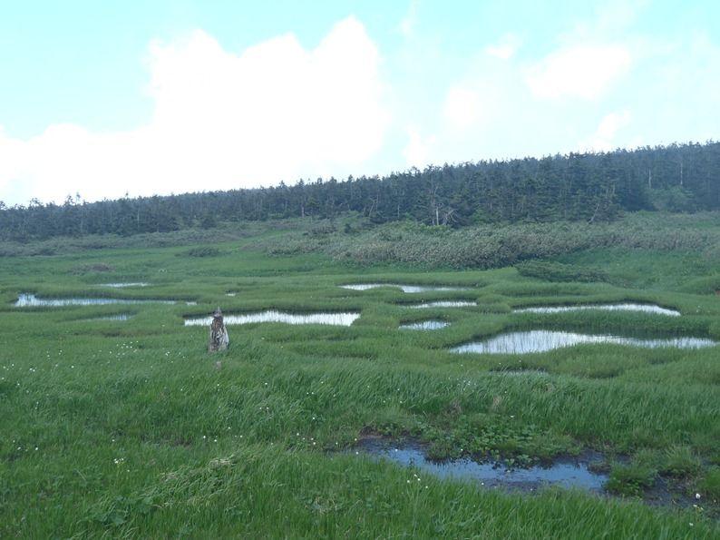 池塘帯.jpg