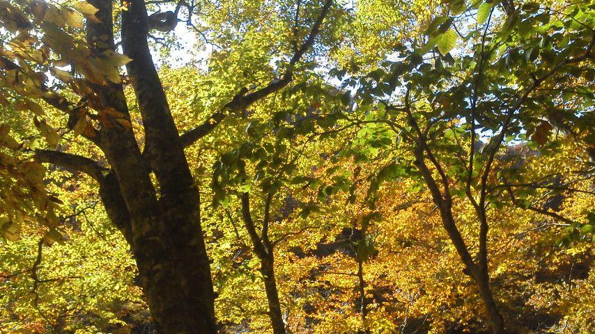 神室山の黄葉.jpg