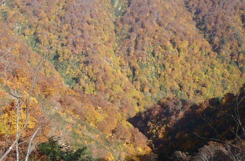 神室山の黄葉2.jpg