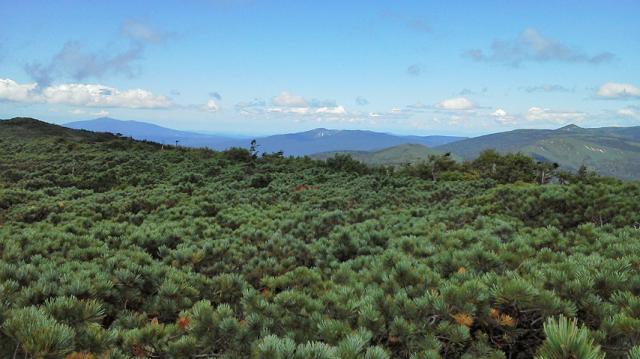 這い松の海原、左から森吉山・焼山・八幡平.png