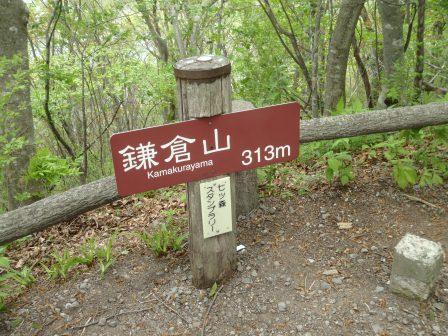 20130519-7forest-01.JPG