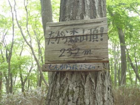 20130519-7forest-03.JPG