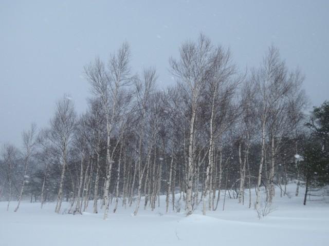 20140113-Izumi-01.JPG