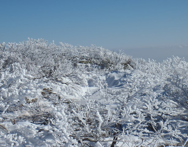 山頂のサンゴ礁.JPG