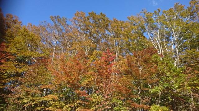 烏帽子岳の紅葉1.JPG
