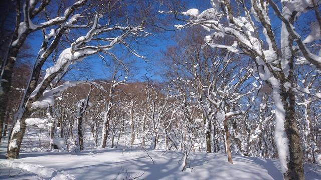 北泉ヶ岳を望む.JPG