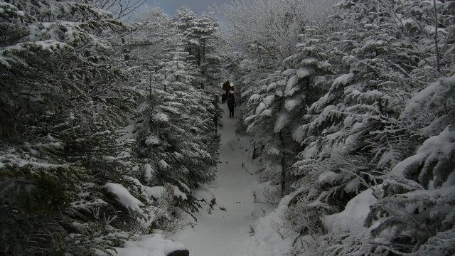 北横登山道.JPG
