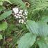 20140628-Leaf-06.JPG