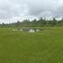 小白森湿原.JPG