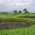 池塘帯1.JPG