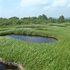 池塘帯2.JPG