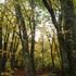 白髭山の黄葉2.JPG