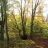 白髭山の黄葉3.JPG