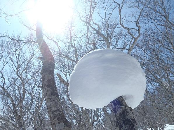 風と雪のいたずら.JPG