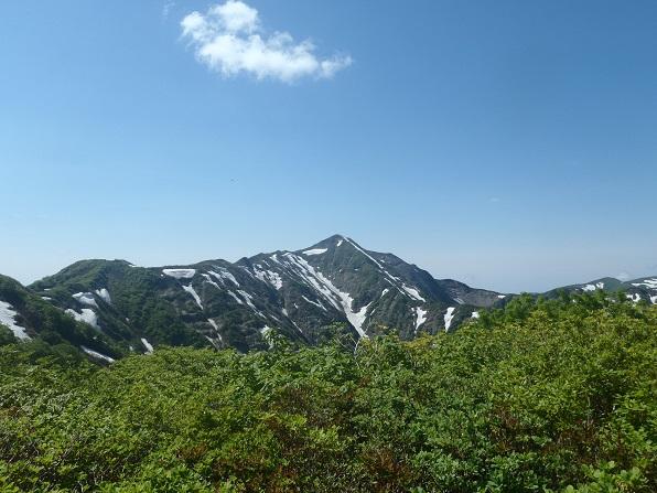 稜線から障子ヶ岳.JPG