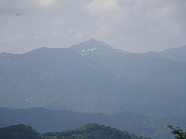 鳥原山から障子ヶ岳.JPG
