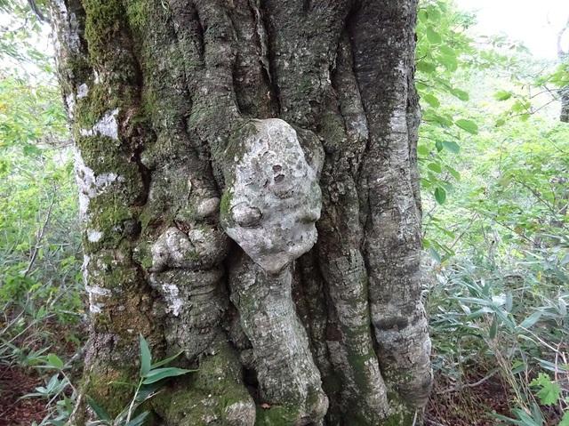 森の精霊.JPG