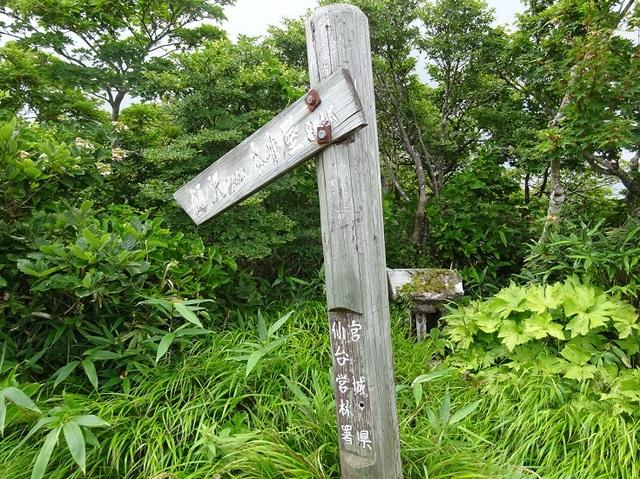 樋ノ沢(オオナメ沢)に降ります。.JPG