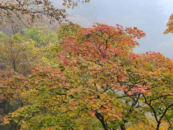 笠取山6.jpg