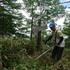 山頂の笹刈り.JPG